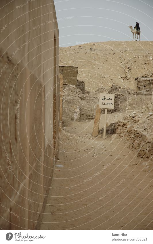 Africa Desert Egypt Camel Pyramid Guard Dromedary