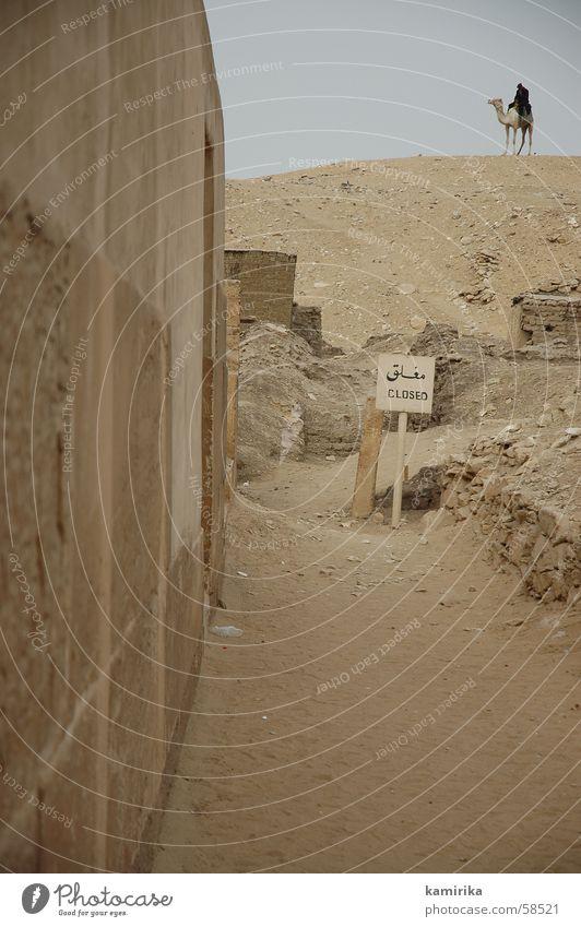 saccara Egypt Africa Guard Camel Dromedary Pyramid exit Desert