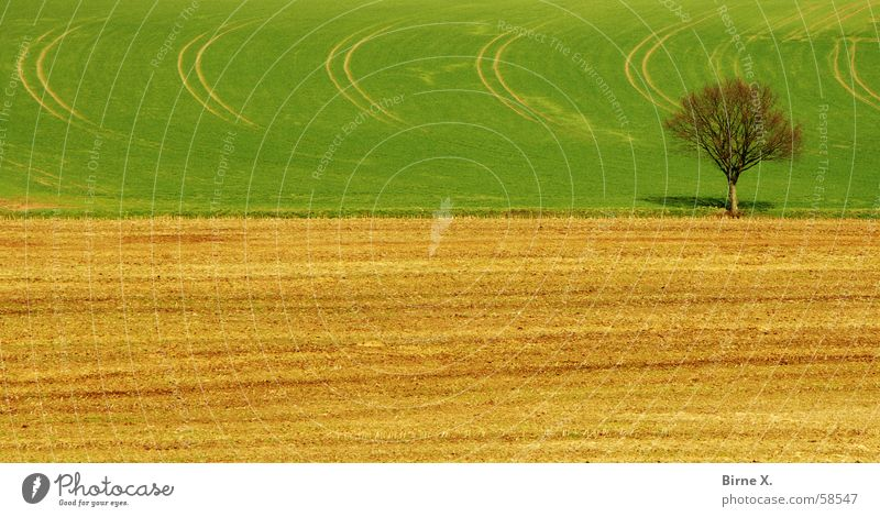 Nature Tree Green Loneliness Spring Field Branch Grain Footpath Twig Wheat April Maize