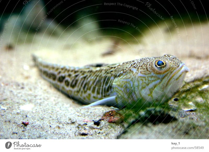 Ocean Fish Aquarium Underwater photo