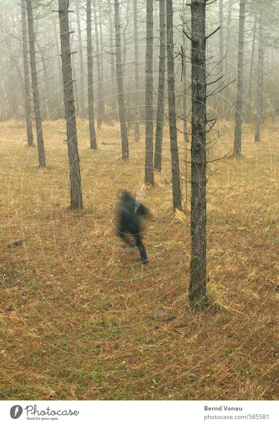 Run Forest!! Human being 45 - 60 years Environment Nature Autumn Plant Tree Brown Gray Green Black Escape Walking Hooded (clothing) Jacket Running Pine