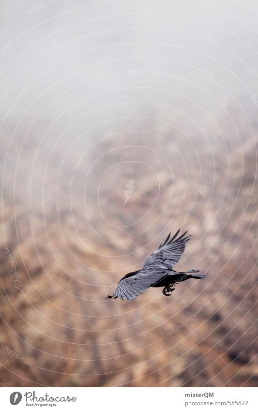 Black Dark Cold Mountain Art Air Bird Fog Aviation Esthetic Feather Floating Raven birds Shroud of fog Sea of fog Misty atmosphere