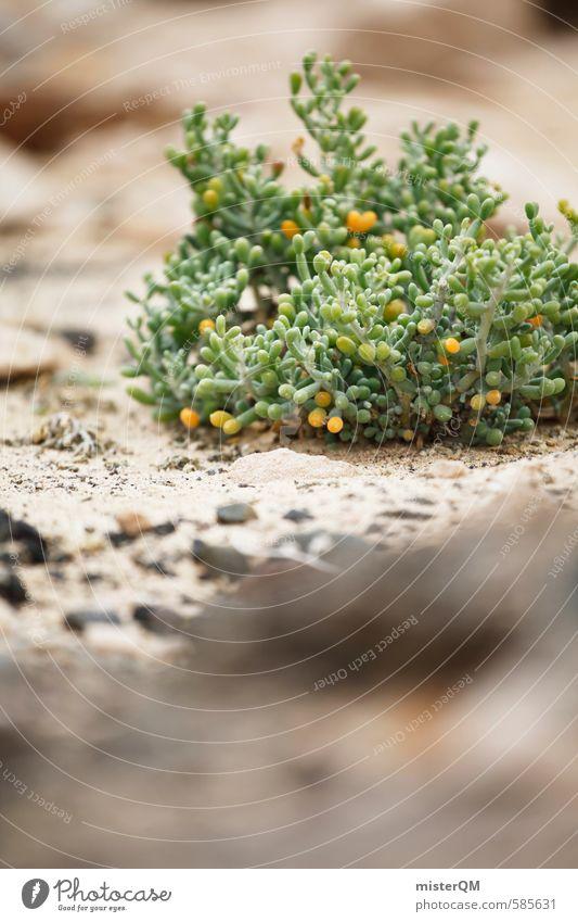 I.love.FV XXXVII Environment Nature Plant Esthetic Contentment Fuerteventura Spain Green Desert Stone desert Dry Growth Colour photo Subdued colour