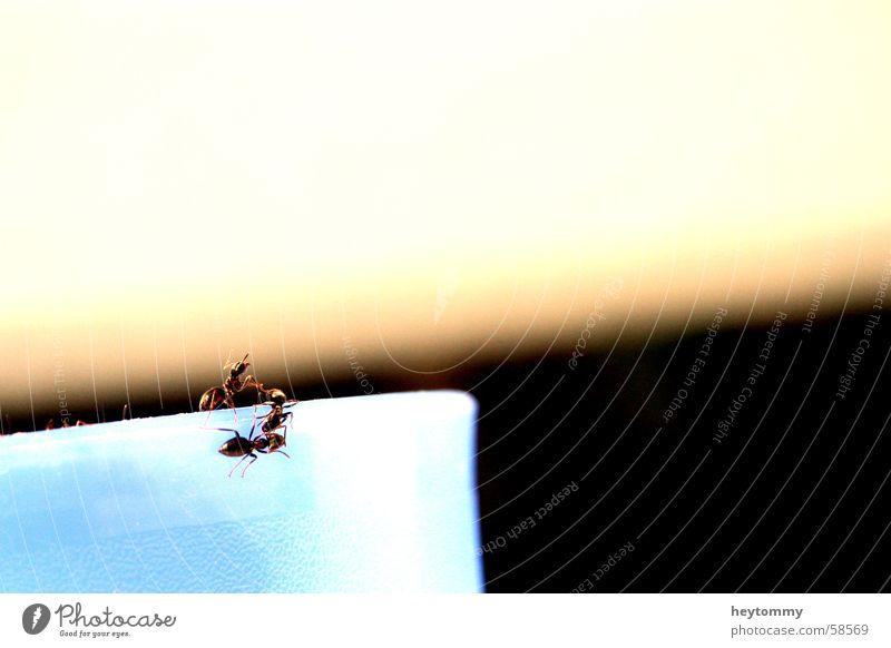 The little crawl II Ant Mug Beaker rim Insect Small Edge Animal Climbing Crawl Ascending Macro (Extreme close-up) Detail Vessel Exterior shot Section of image