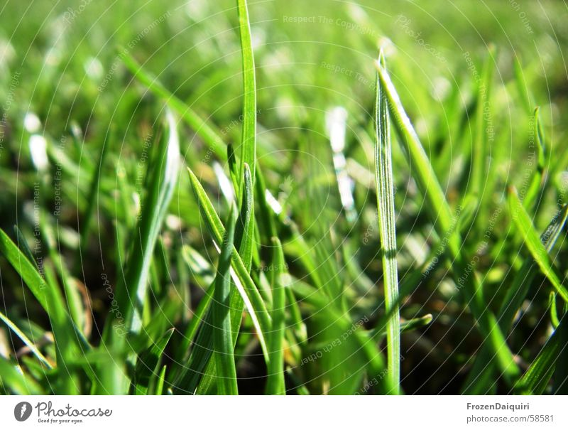 Beautiful Green Sun Dark Yellow Meadow Grass Spring Bright Fresh Happiness Lawn Blade of grass