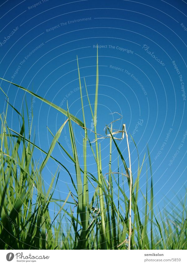 Sky Green Blue Grass Floor covering Blade of grass Portrait format