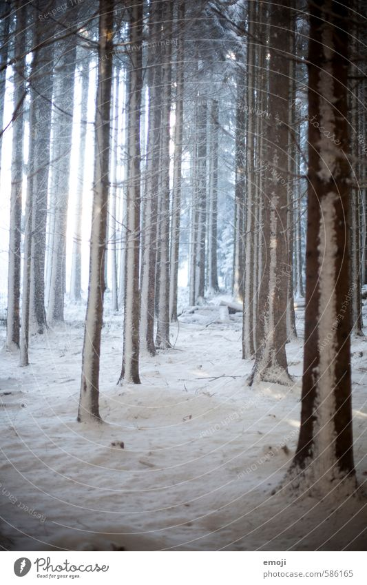 Nature Tree Landscape Winter Forest Cold Environment Snow Natural