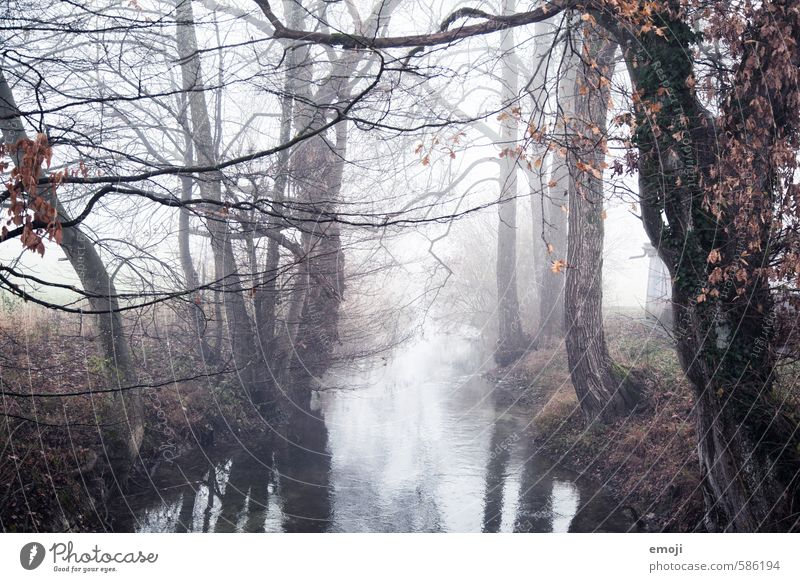 case Environment Nature Landscape Autumn Bad weather Fog Tree Brook River Dark Creepy Gray Colour photo Subdued colour Exterior shot Deserted Day