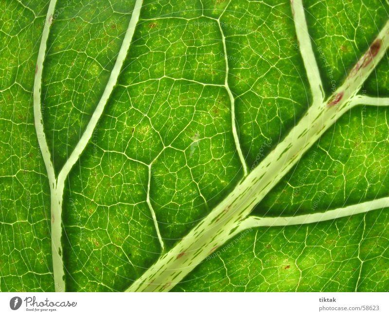 Nature Green Tree Leaf Calm Street Life Lanes & trails Garden Park Healthy Fresh Hope Target Map Virgin forest