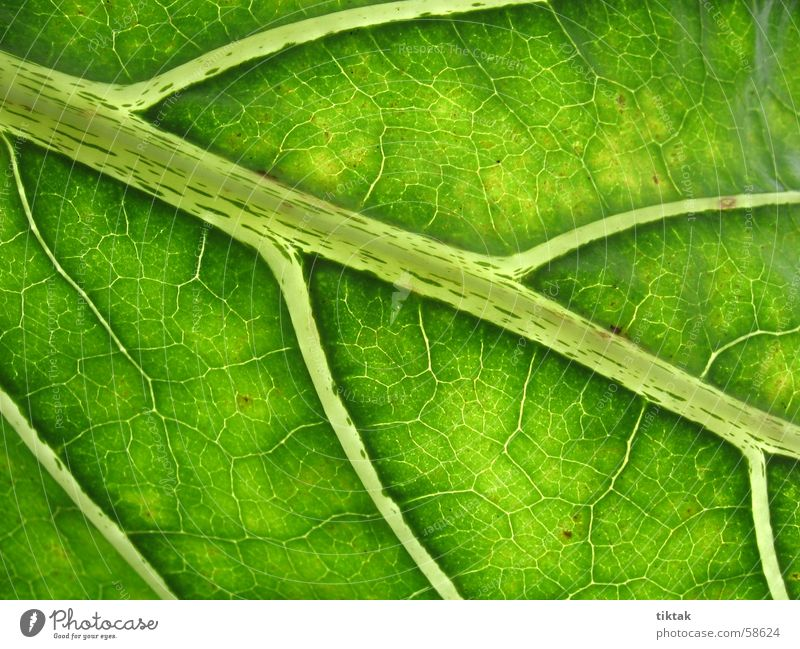 Nature Green Tree Leaf Calm Street Life Lanes & trails Garden Park Healthy Natural Fresh Hope Target Virgin forest