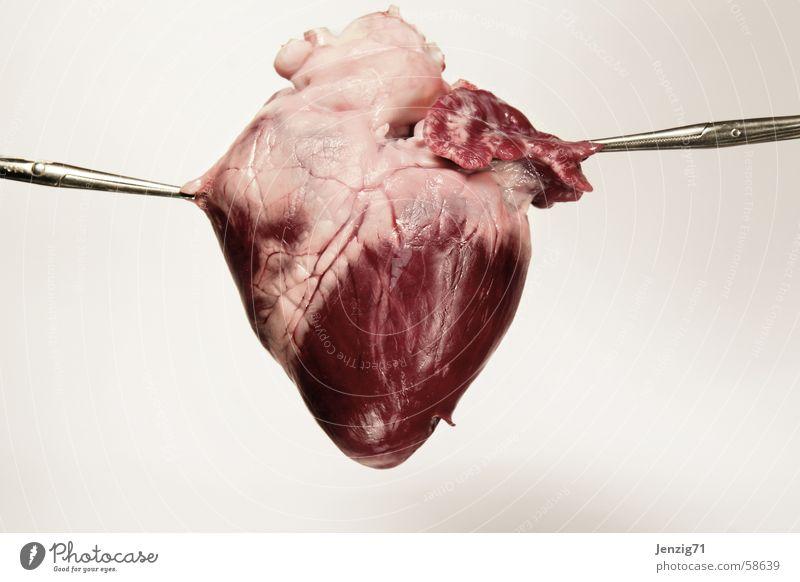 Heart Pain Meat Swine Raw Clamp Organ