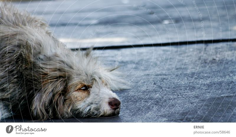 Old Vacation & Travel Animal Dog Hair and hairstyles Sadness Concrete Grief South America Chile