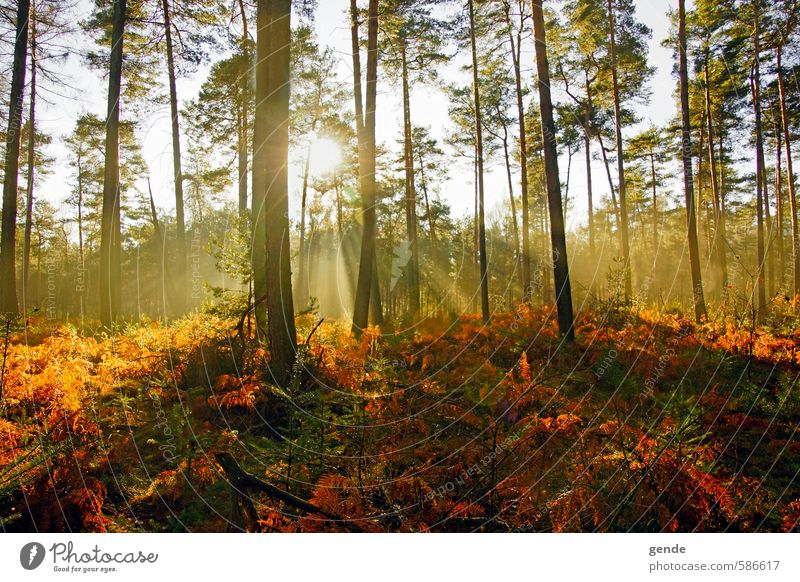 Nature Vacation & Travel Plant Sun Tree Landscape Leaf Forest Environment Emotions Autumn School Moody Leisure and hobbies Tourism Hiking