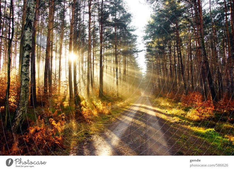Sunbeams over the path Environment Nature Landscape Plant Earth Sunlight Autumn Climate Weather Beautiful weather Tree Grass Bushes Moss Leaf Foliage plant