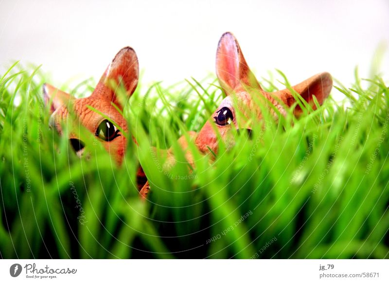 Nature Green Calm Eyes Animal Meadow Grass Spring Brown 2 Feasts & Celebrations Nose Search Lawn Ear Easter