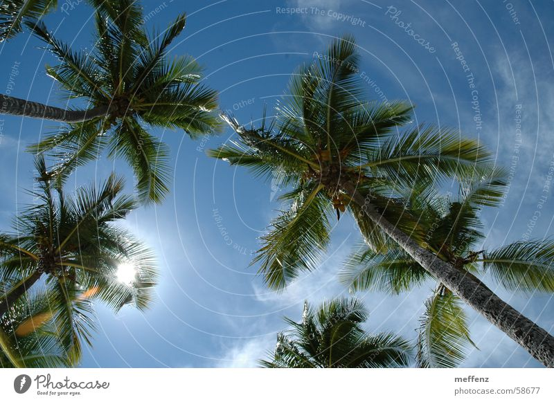 Sky Vacation & Travel Sun Summer vacation Palm tree Cuba Lesser Antilles Nature Guadeloupe