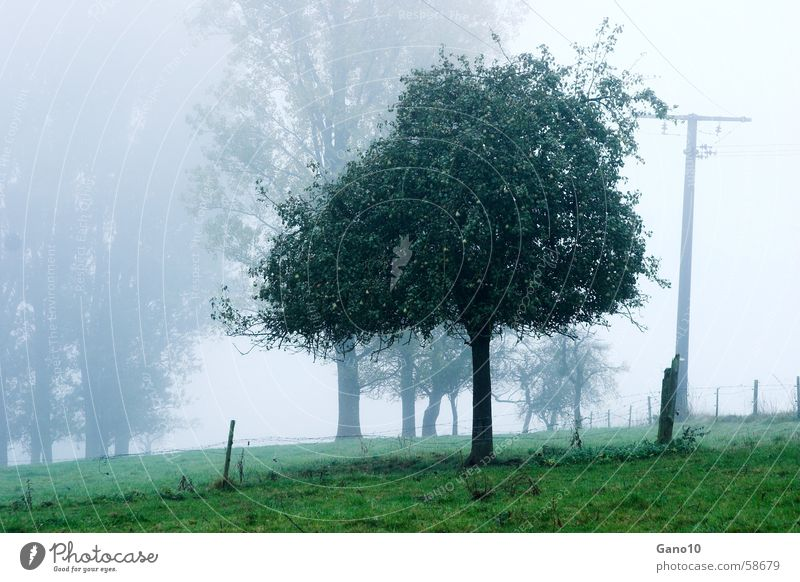 Tree Green Meadow Moody Fog Apple tree Eifel