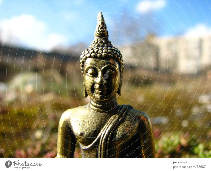 Buddha in the moss Exotic Happy Harmonious Meditation 1 Think Wisdom Relaxation Religion and faith Brass Philosophy Discern Statue of Buddha Sunlight Front view