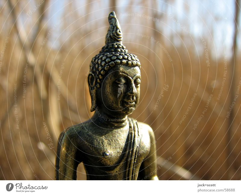 Buddha in reeds luck Meditation Face 1 Beautiful weather Common Reed Think Cute Gold Moody Force Trust Compassion Peaceful Goodness Unwavering Belief