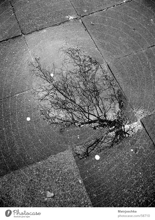 Tree Clouds Street Gray Puddle