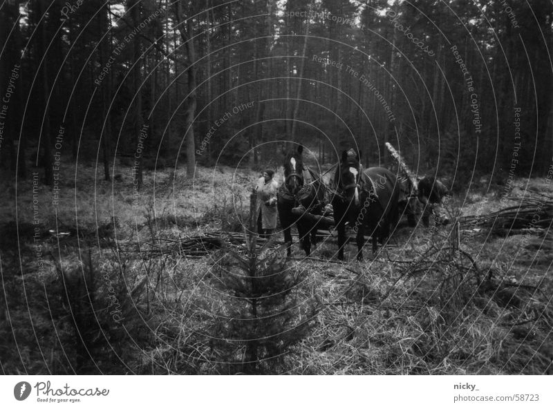 outside from the woods we come here Horse Forest Man Horse-drawn carriage Creepy Black White Winter Wood Collection Work and employment Canada Dark Threat Old