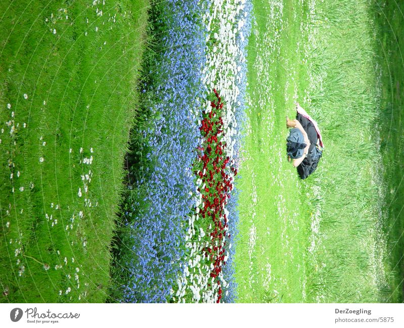 chill Relaxation Meadow Summer Calm Lie Beautiful weather