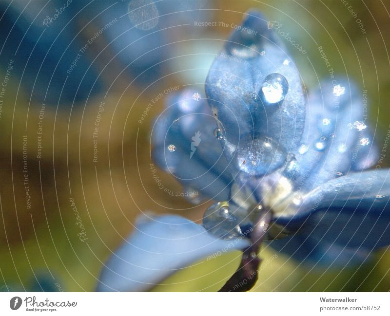 Flower Blue Blossom Rain Drops of water Rope Delicate