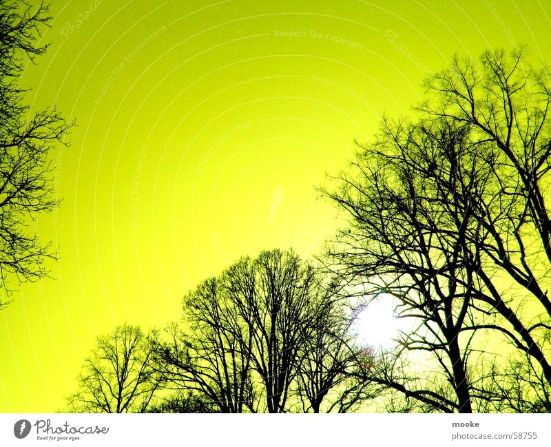 Yellow Sky Tree Black Sun