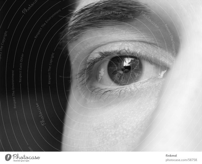 Man Eyes Think Brown Face Eyelash Iris