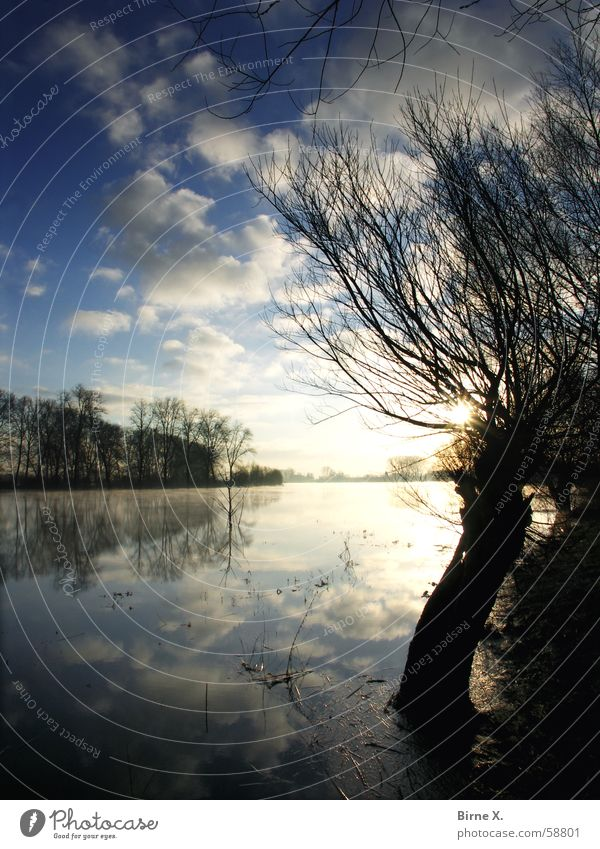 Nature Water Sky Tree Winter Clouds Lake Idyll Morning Pond Niederrhein Xanten Birten