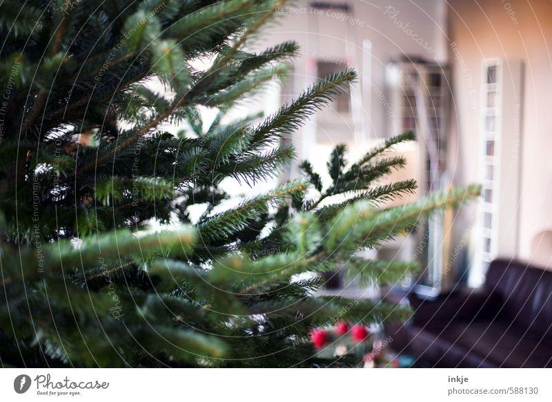 it christmas Lifestyle Living or residing Room Living room Feasts & Celebrations Christmas & Advent Winter Fir branch Fir tree Christmas tree Thorny Green