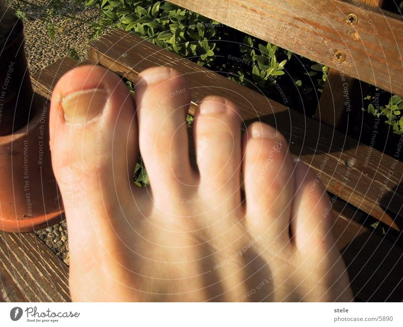 Human being Feet Toes