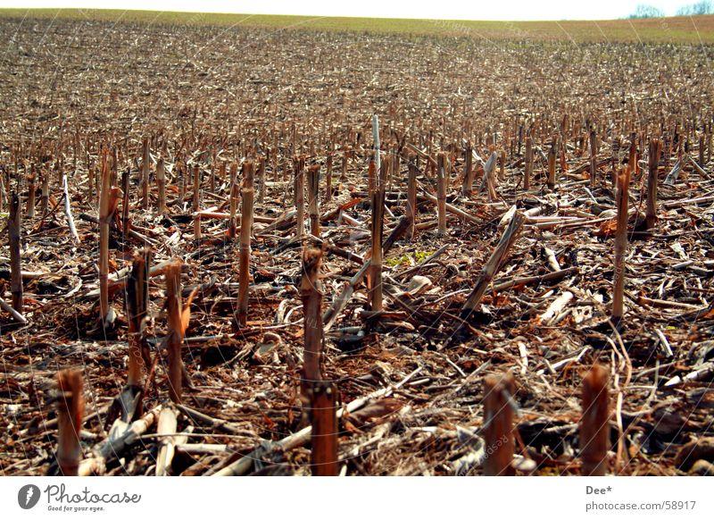 Sky Tree Far-off places Death Meadow Horizon Brown Field Multiple Hope Grief Many Grain Footpath Fight Like