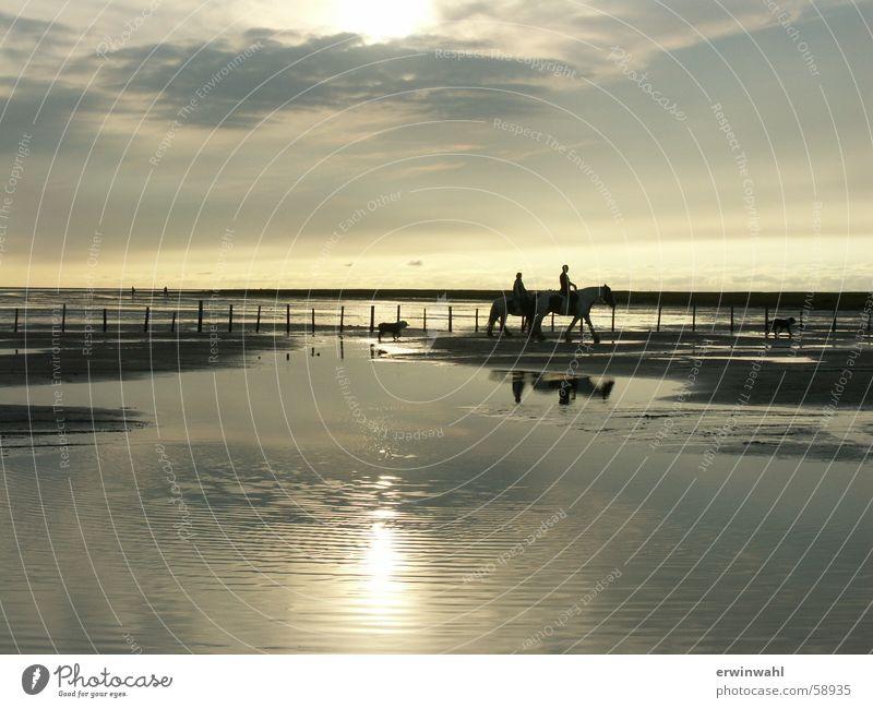 Sunset North Sea Horse Landscape Back-light