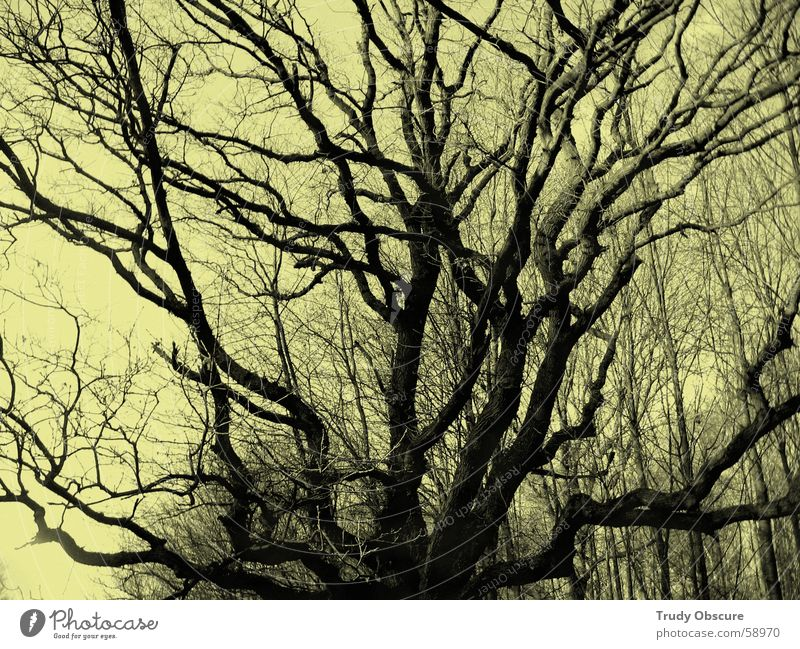 Sky Tree Forest Earth Vantage point Branch Treetop Branchage Undergrowth Synthesis Leafless Range