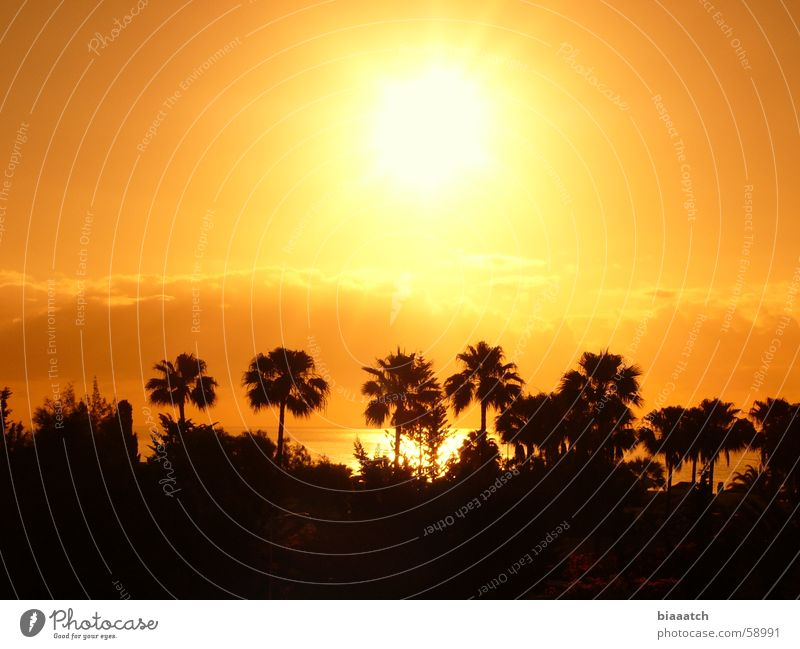 Sun Ocean Summer Vacation & Travel Sunset Sunrise Palm tree Celestial bodies and the universe Canaries