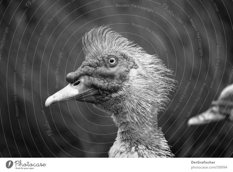 Eyes Hair and hairstyles Bird Contentment Wild animal Skin Nose Feather Wrinkles Thin Brave Stupid Facial expression Punk Neck Beak