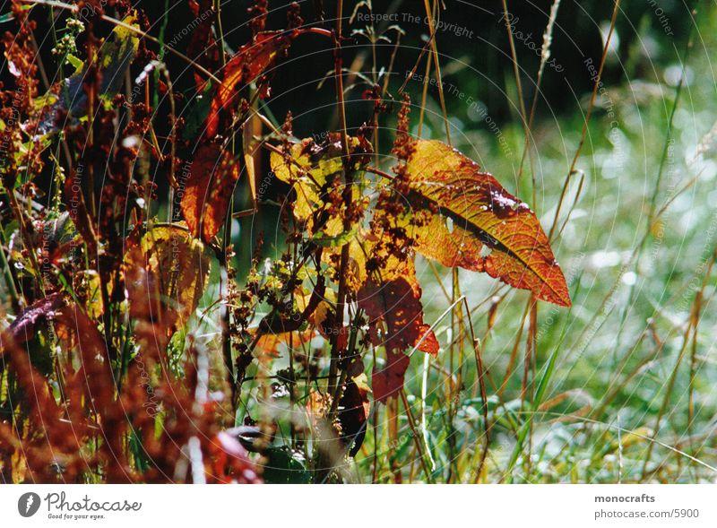 autumn Autumn Leaf Nature Beautiful weather
