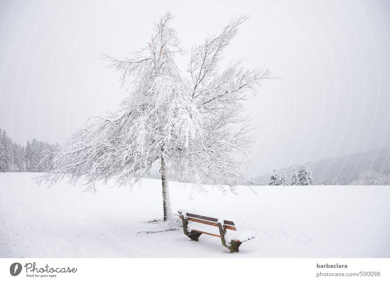 First 2014 | At 1000 m altitude Landscape Sky Winter Snow Tree Forest Black Forest Bench Fresh Bright Cold White Moody Joy Calm Esthetic Bizarre Loneliness