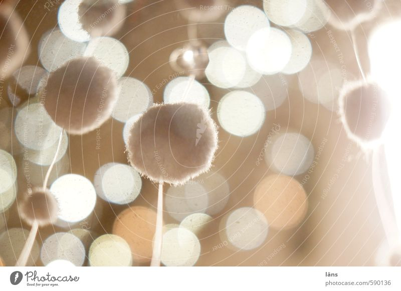bobble Decoration Glittering Illuminate Exceptional Soft Brown Uniqueness Point Suspended Ball Sphere Spherical Round Colour photo Interior shot Abstract