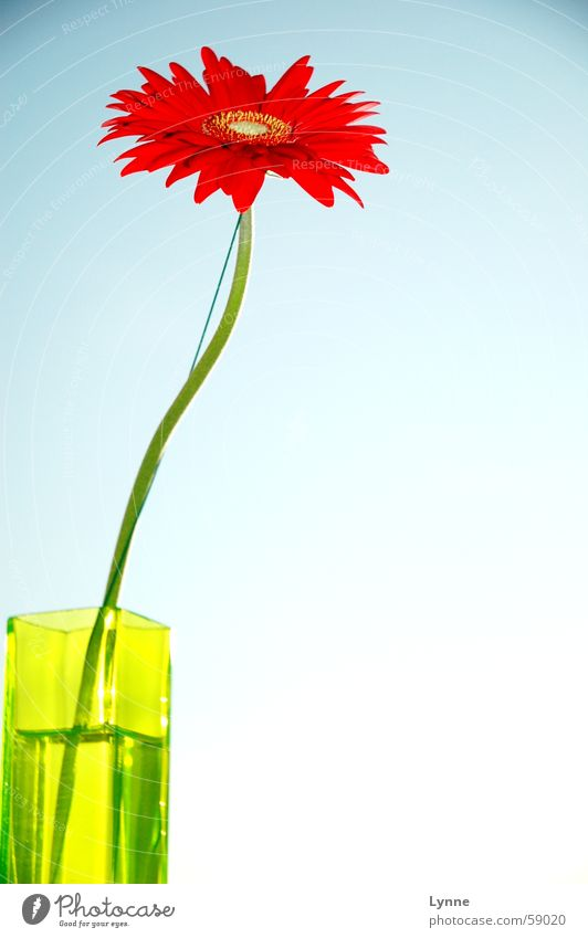 Sky Flower Green Blue Red Leaf Spring Longing Stalk Vase Gerbera