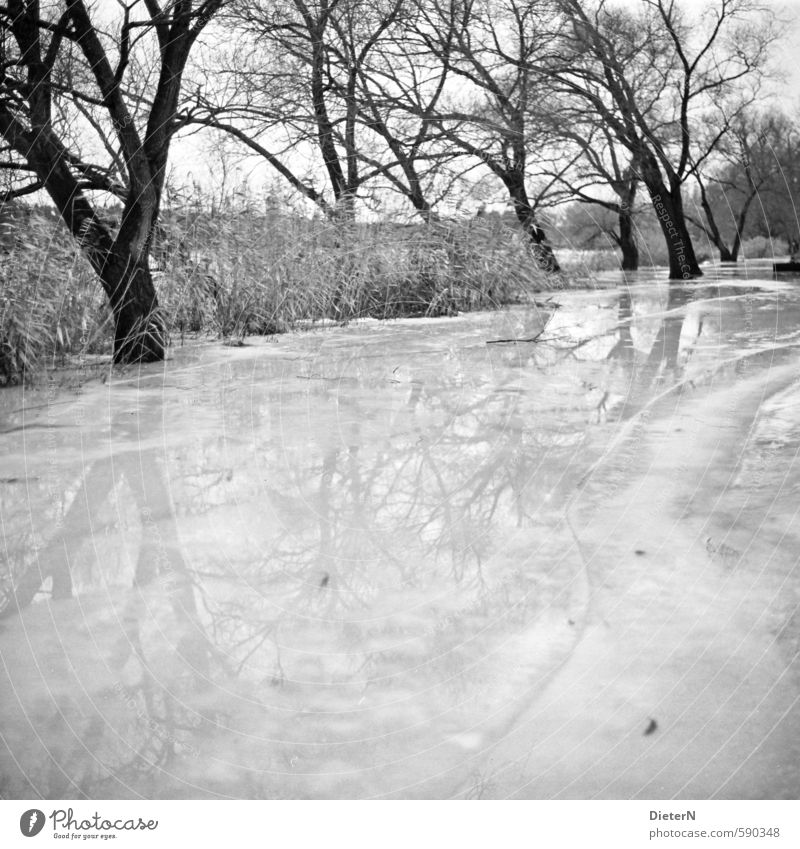 mirrors Nature Landscape Water Winter Climate Ice Frost Tree Lakeside River bank Glittering Cold Black White Surface of water Reflection Line