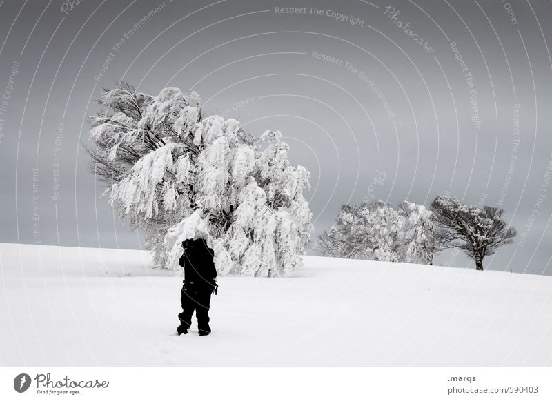 Book Search Trip Human being Man Adults 1 Environment Nature Landscape Elements Sky Storm clouds Winter Climate Bad weather Ice Frost Snow Tree Beech tree Stand