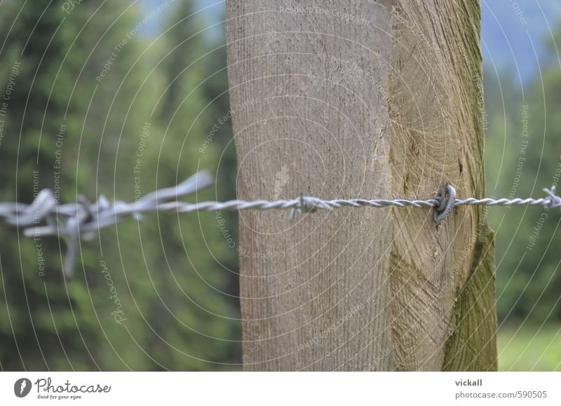 Fenced in with barbed wire Field Forest Wood Metal Hiking Barbed wire Spine Thorn Tree trunk Colour photo Exterior shot Close-up Day