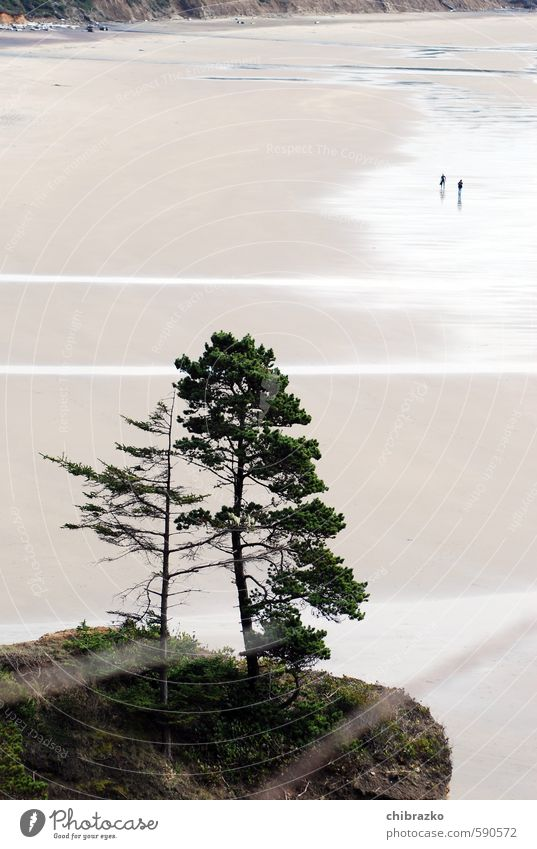 Tiny little people Freedom Beach Human being 2 Sand Water Tree Colour photo Exterior shot Day Bird's-eye view