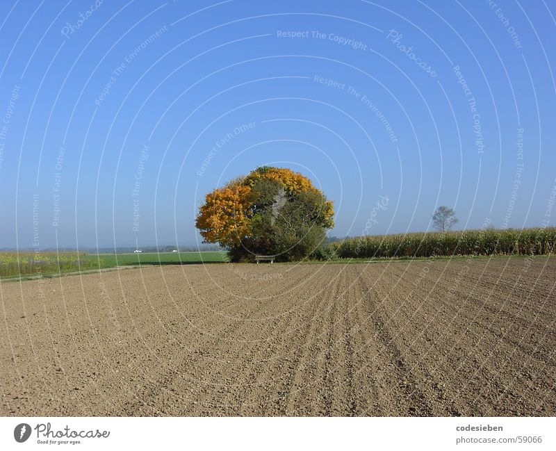 Beautiful Sky Tree Sun Blue Plant Joy Far-off places Autumn Freedom Warmth Field Weather Force Physics Hot