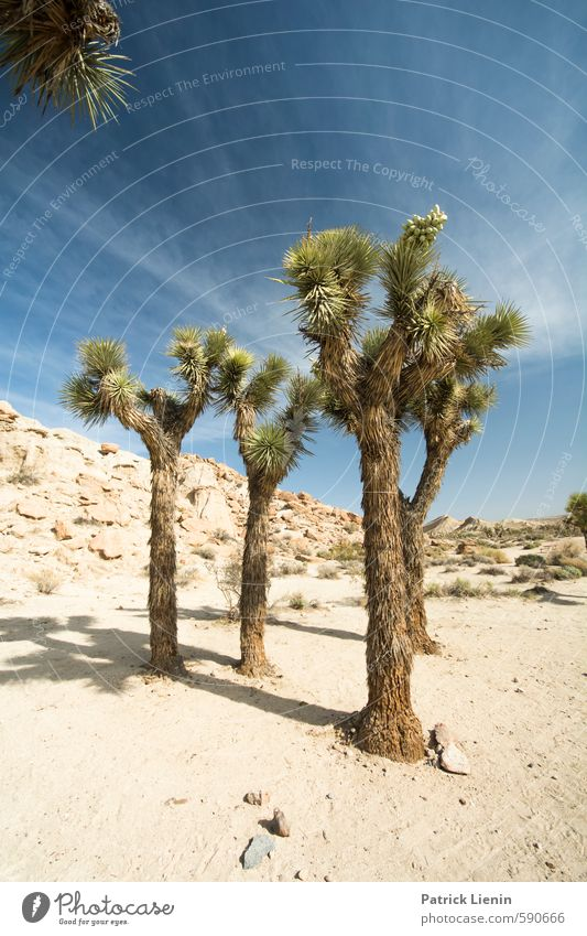 Joshua Tree Well-being Summer Summer vacation Sun Hiking Environment Nature Landscape Elements Air Sky Clouds Sunlight Weather Beautiful weather Warmth Drought