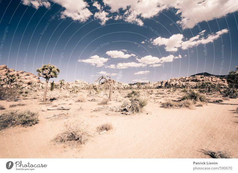 bone dry Contentment Senses Calm Trip Adventure Far-off places Freedom Summer Environment Nature Landscape Elements Earth Sand Sky Clouds Sun Sunlight Climate