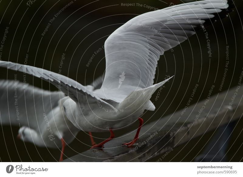 departure Animal Bird 2 Flying Free Together White Subdued colour Exterior shot Close-up Deserted Blur Motion blur
