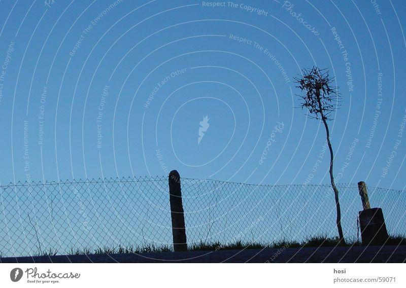 Sky Tree Street Meadow Fence Pole Roadside Out of town Rorbas